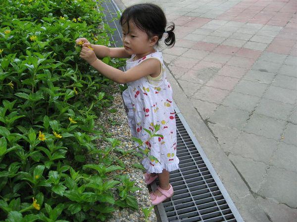 要離開了~ 我看到一個好美的小花~~ 偷偷拔下來~