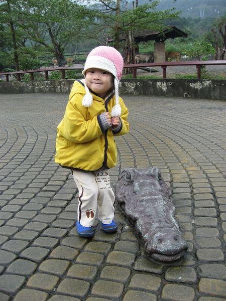 地上有一隻鱷魚