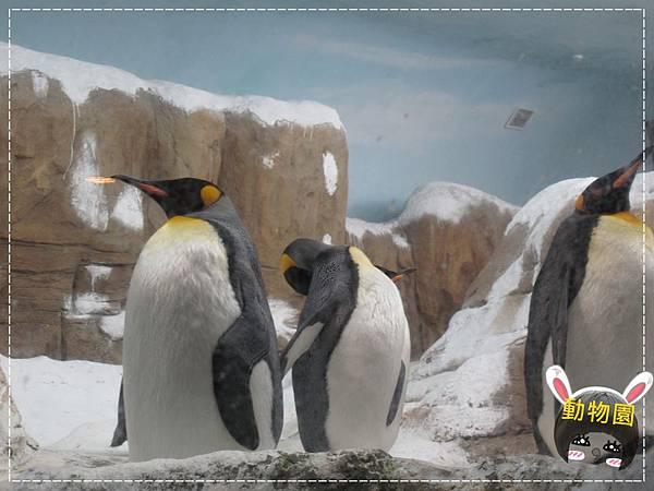 動物園IMG_8089.JPG
