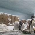 動物園IMG_8094.JPG