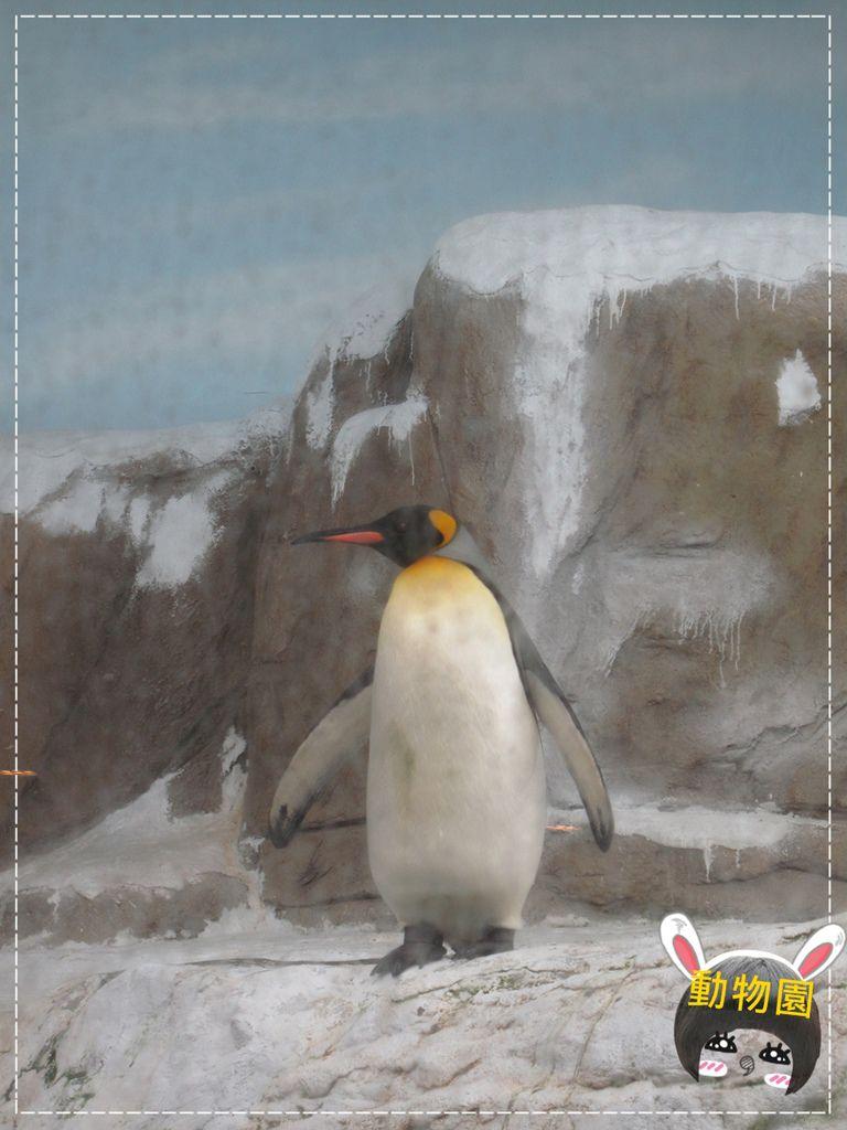動物園IMG_8098.JPG