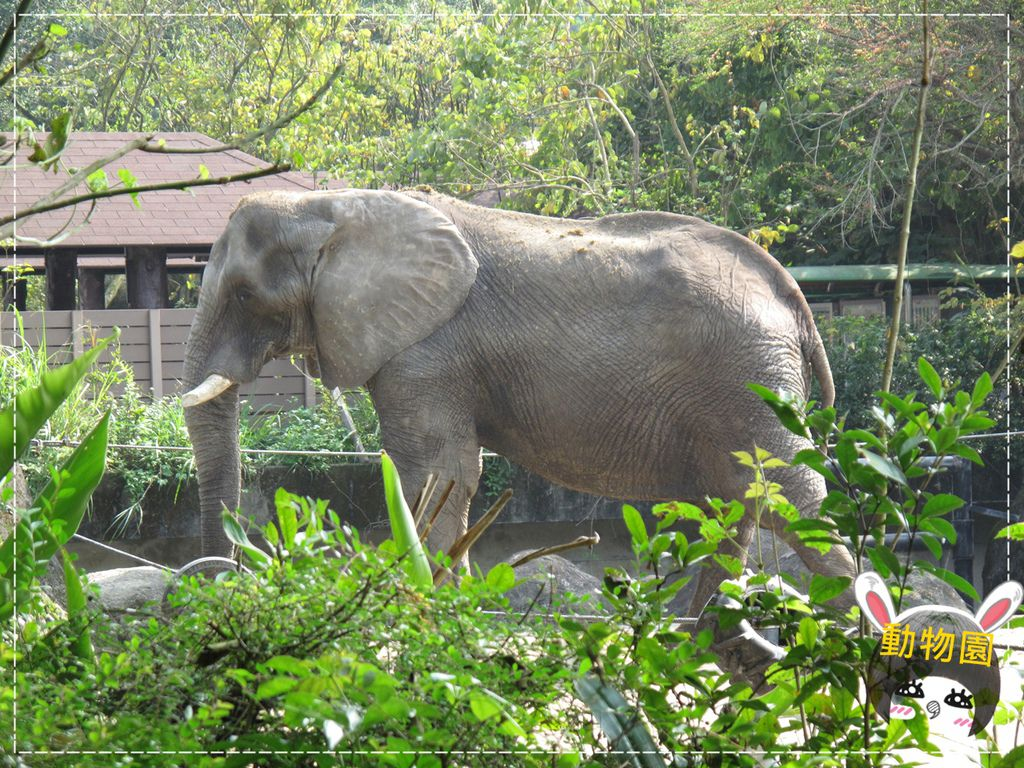 動物園IMG_8121.JPG