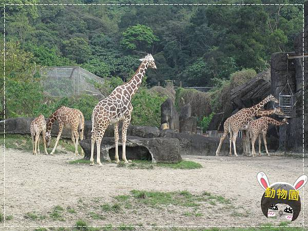 動物園IMG_8143.JPG