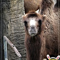 動物園IMG_8145-1.JPG