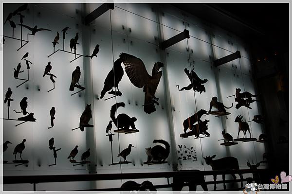 台灣博物館IMGP2164.png