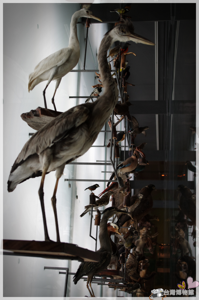 台灣博物館IMGP2173.png