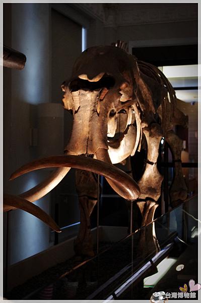台灣博物館IMGP2198.png