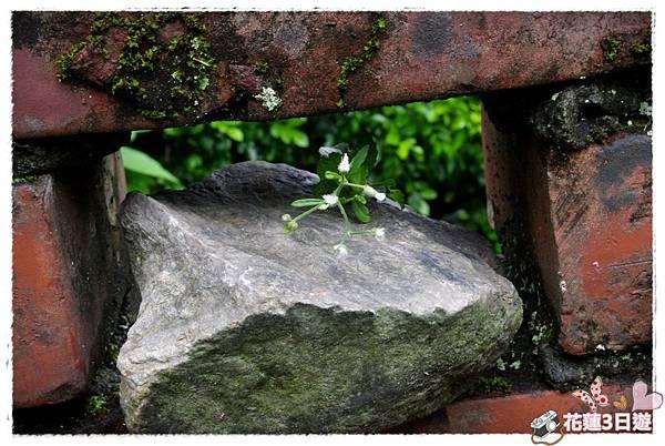 花蓮3日遊之DAY2-IMGP4256.JPG