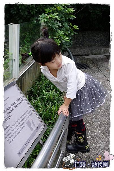 小MICA動物園IMGP5027.JPG
