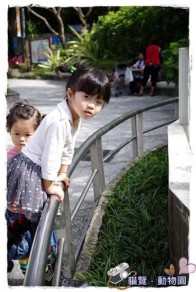 小MICA動物園IMGP5034.JPG