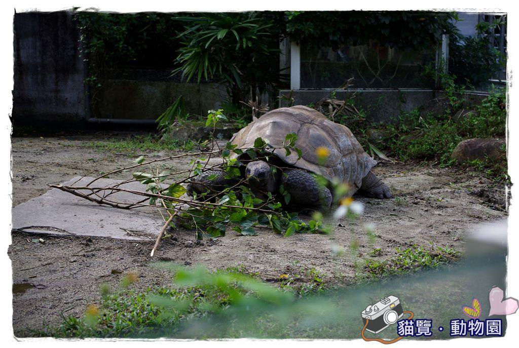 小MICA動物園IMGP5037.JPG