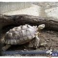 小MICA動物園IMGP5063.JPG