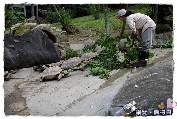 小MICA動物園IMGP5065.JPG