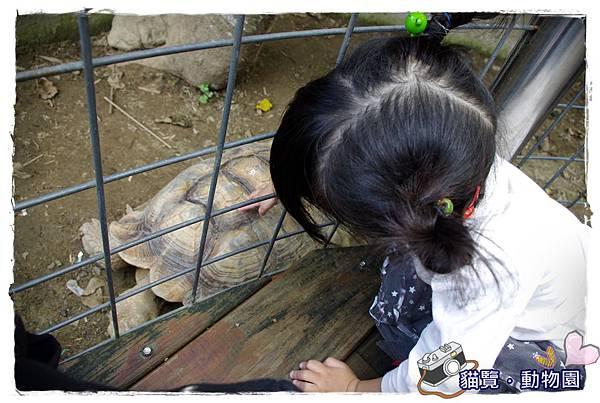 小MICA動物園IMGP5067.JPG