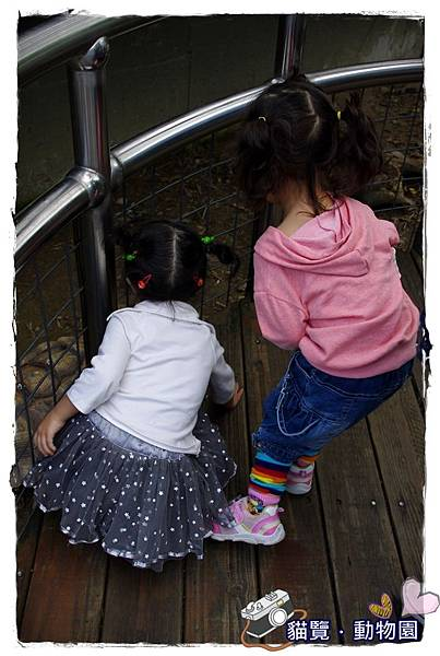小MICA動物園IMGP5069.JPG