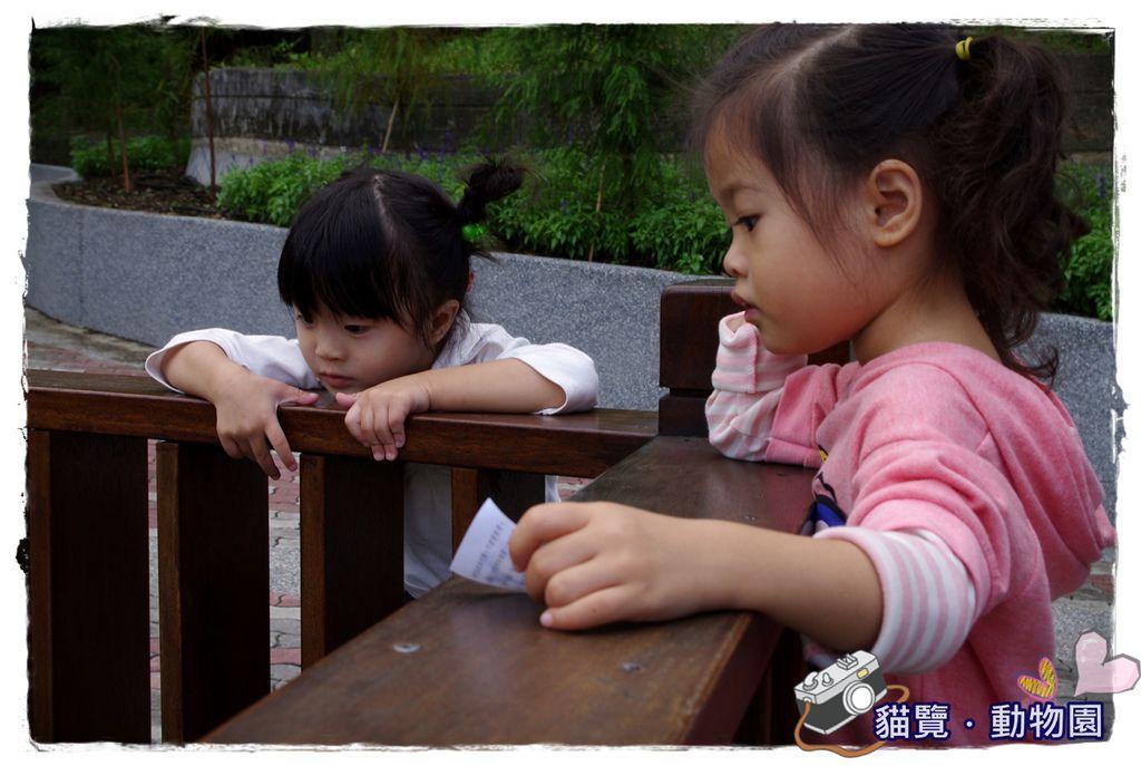 小MICA動物園IMGP5074.JPG