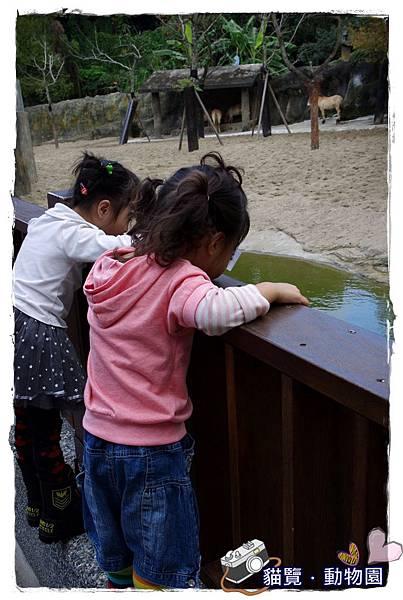 小MICA動物園IMGP5076.JPG