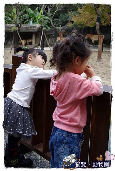 小MICA動物園IMGP5080.JPG