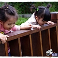 小MICA動物園IMGP5082.JPG