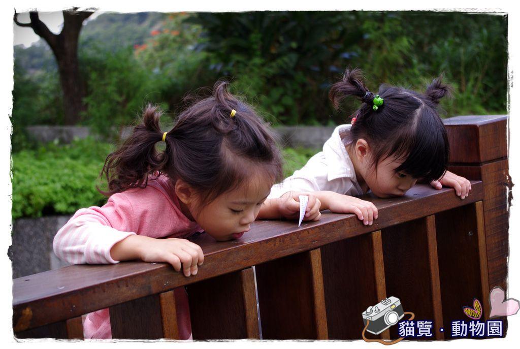 小MICA動物園IMGP5083.JPG