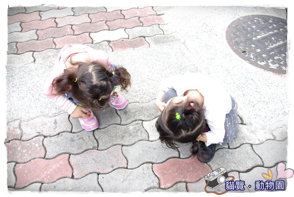 小MICA動物園IMGP5093.JPG