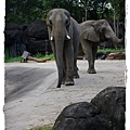 小MICA動物園IMGP5107.JPG