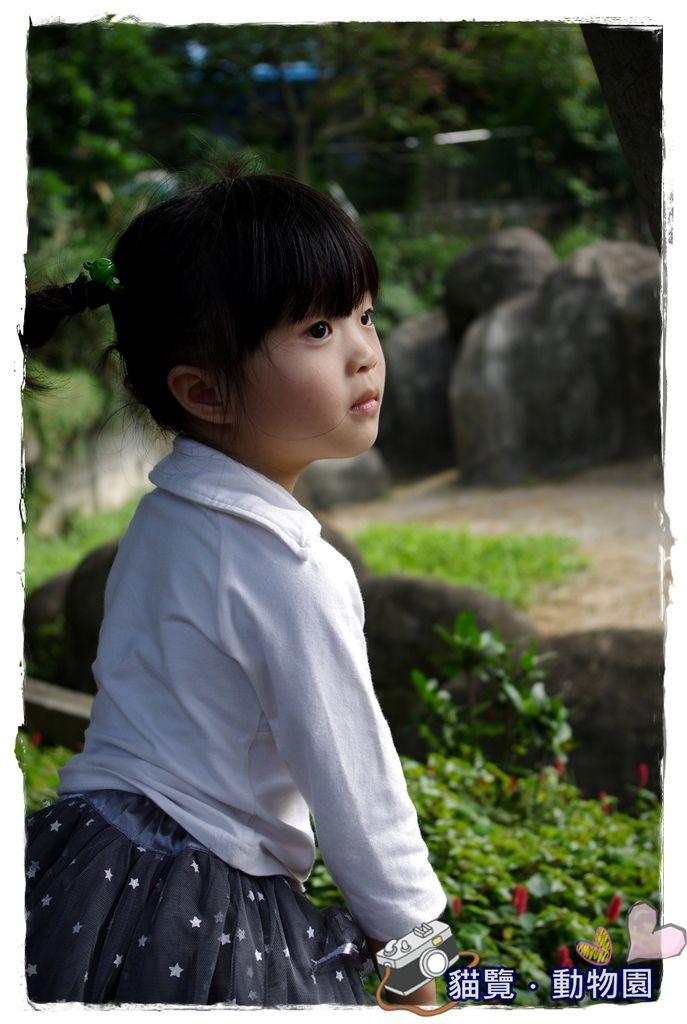 小MICA動物園IMGP5117.JPG