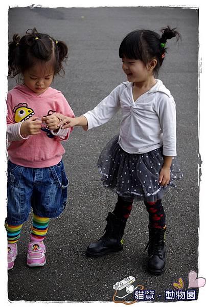 小MICA動物園IMGP5121.JPG