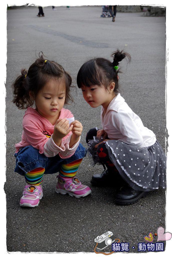 小MICA動物園IMGP5125.JPG