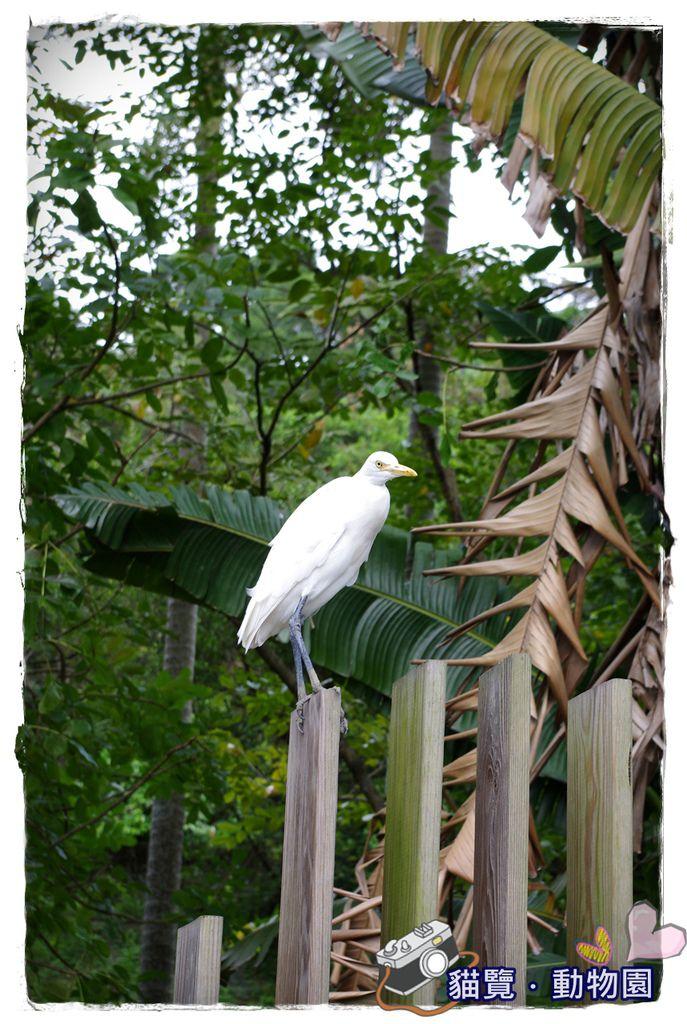 小MICA動物園IMGP5142.JPG