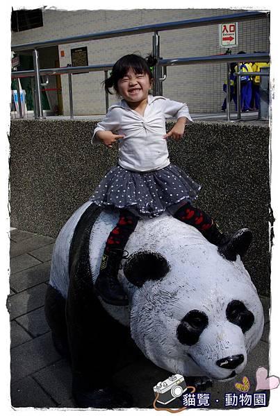 小MICA動物園IMGP5207.JPG