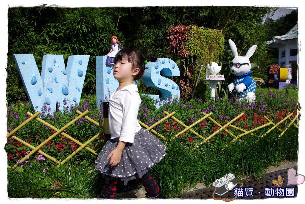 小MICA動物園IMGP5223.JPG