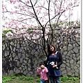 陽明山花季IMG_2556