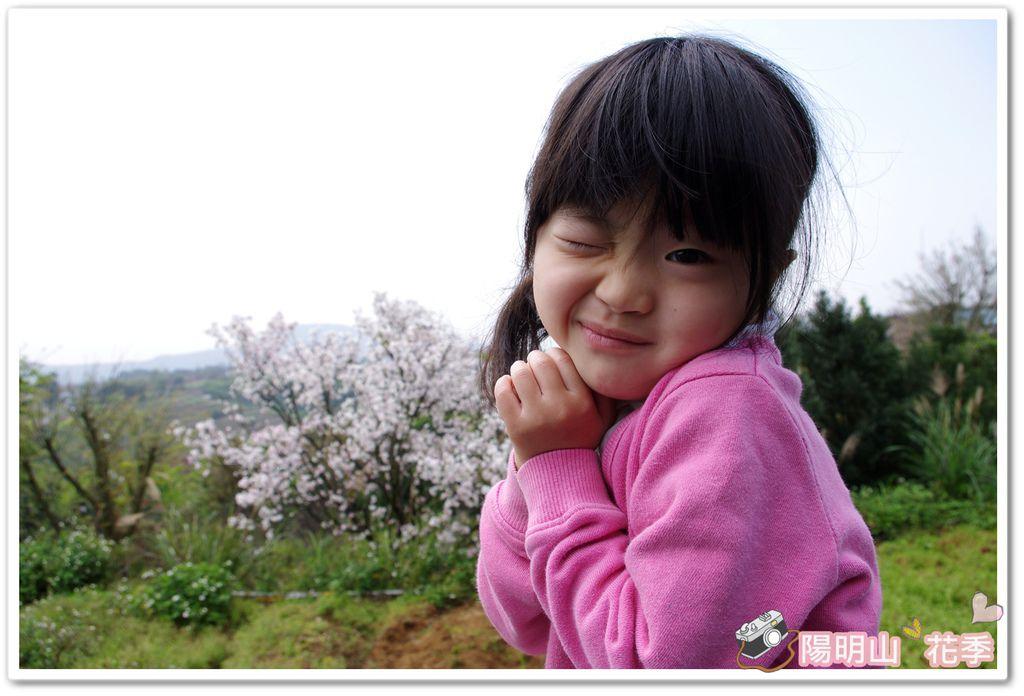 陽明山花季IMGP7074