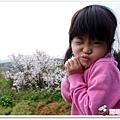 陽明山花季IMGP7075