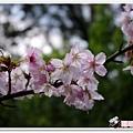 陽明山花季IMGP7087