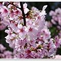 陽明山花季IMGP7099