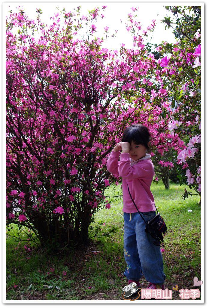 陽明山花季IMGP7103