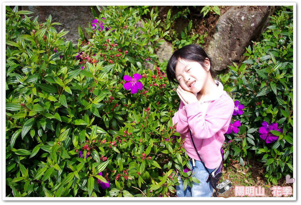 陽明山花季IMGP7109
