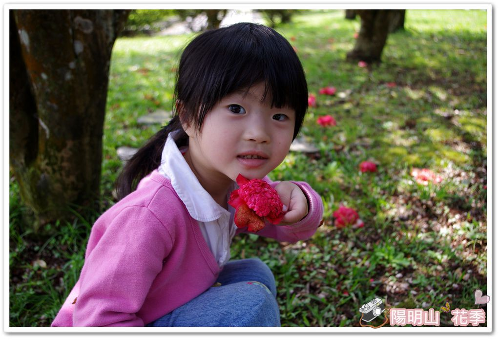 陽明山花季IMGP7113