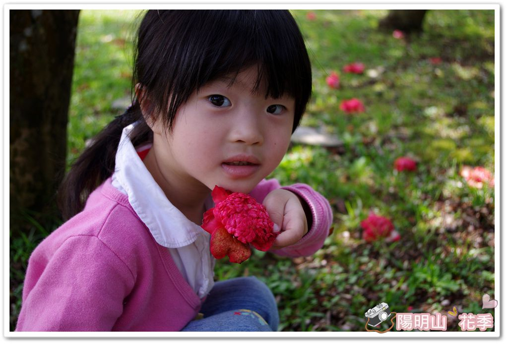 陽明山花季IMGP7114