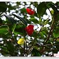 陽明山花季IMGP7115