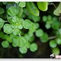 陽明山花季IMGP7153