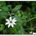 陽明山花季IMGP7162