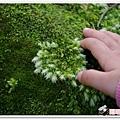 陽明山花季IMGP7185