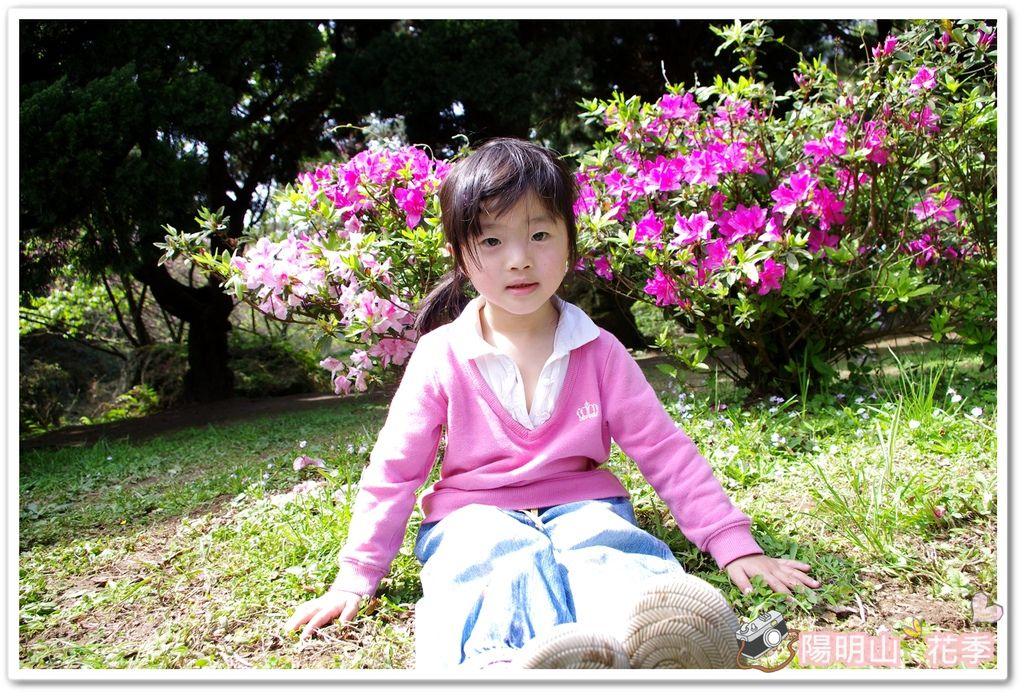 陽明山花季IMGP7190