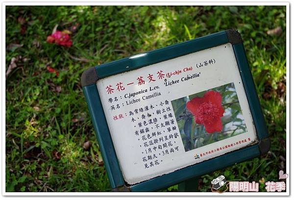 陽明山花季IMGP7226