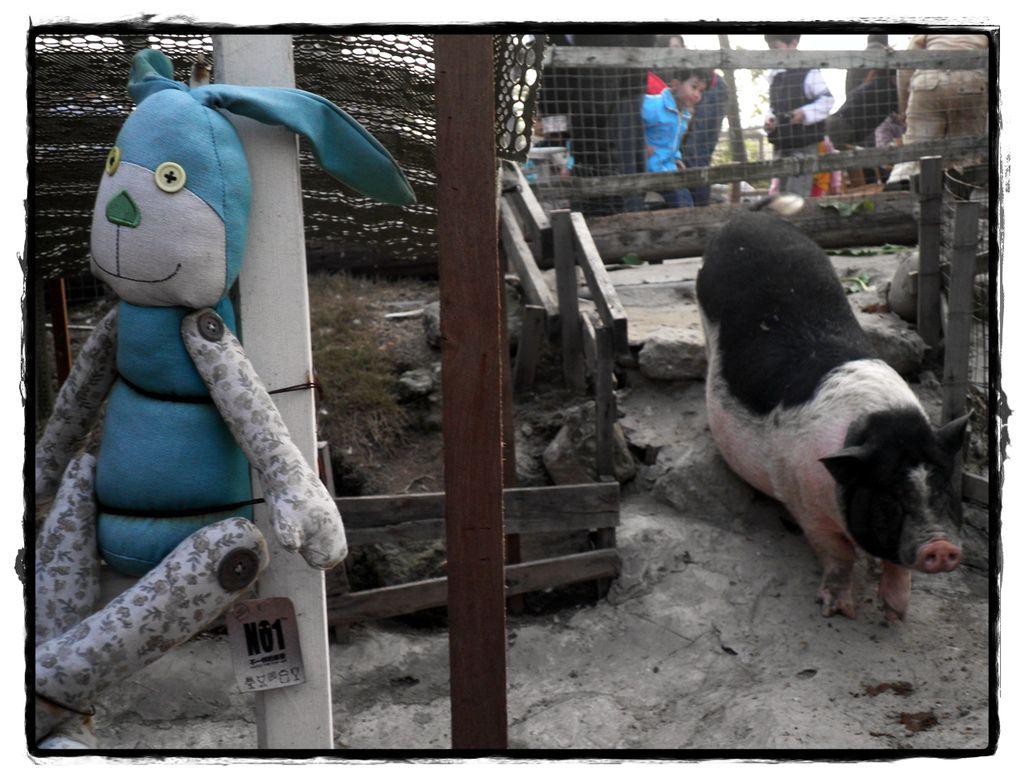 兔子P2270156 20110227.JPG
