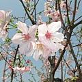 天元宮IMG_7020 20110313.JPG