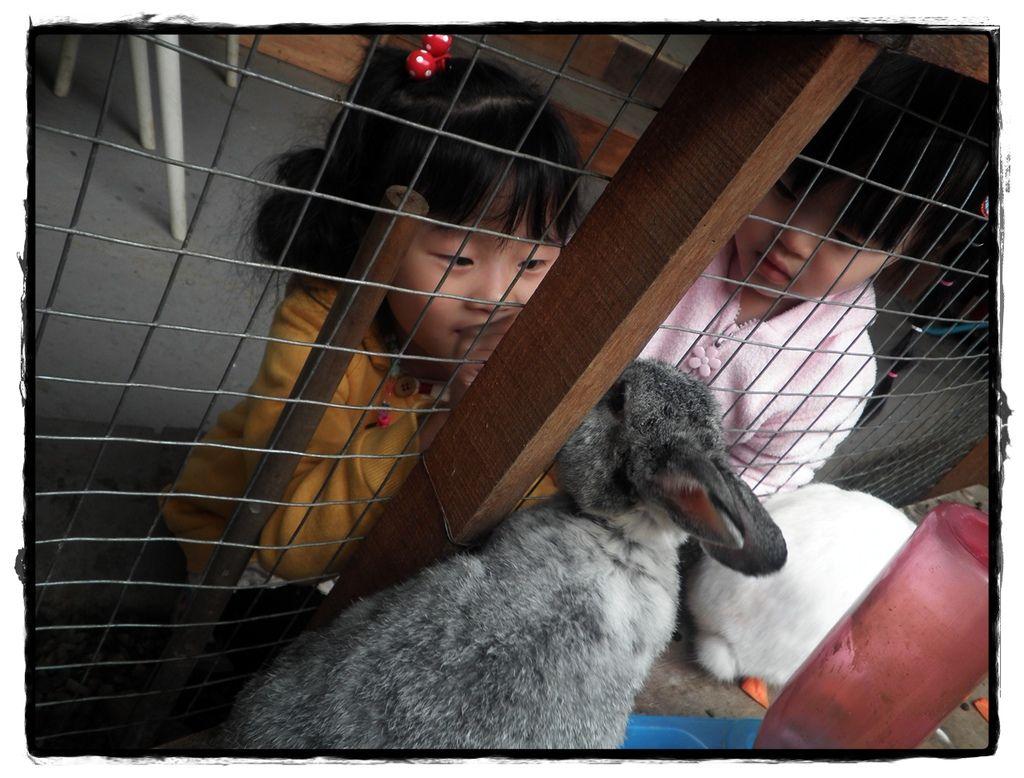兔子P2270093 20110227.JPG